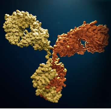 Definition and classification of the antibodies
